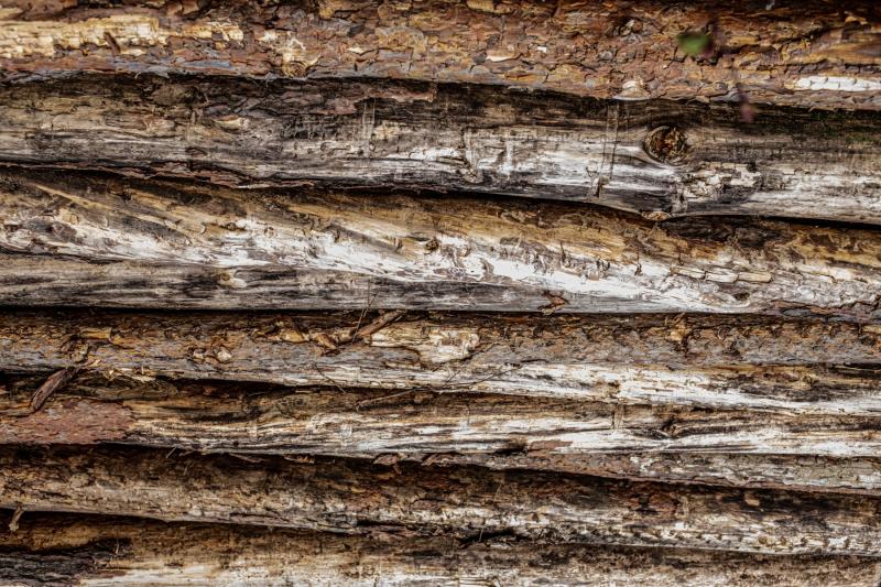Wald_Holz-8732