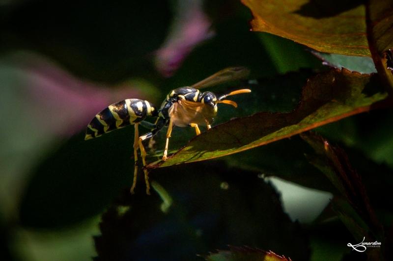 Insekten-9635