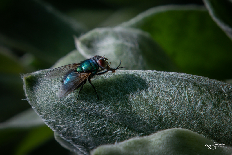 Insekten-9653