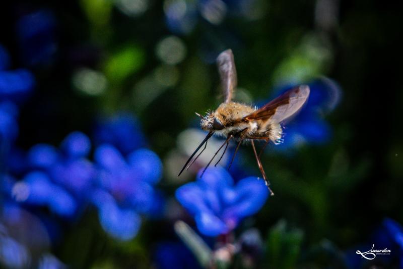Insekten-9704