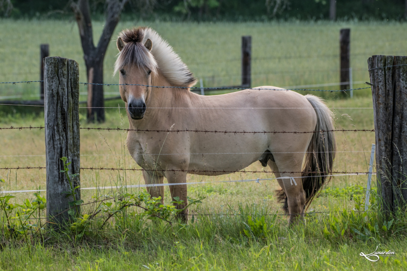 Pferde-0177